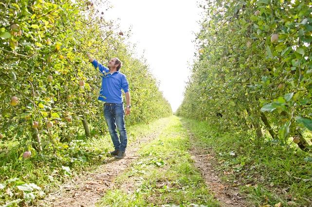 Manzanas ecológicas de Lleida - Veritas