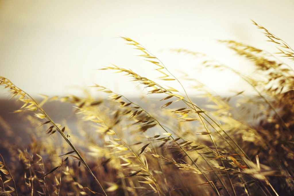 Cereales integrales ecológicos, hasta el doble de minerales - Veritas