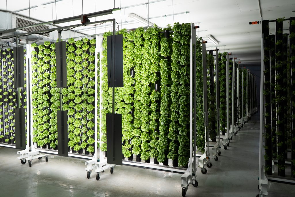 Agricultura vertical - Groots