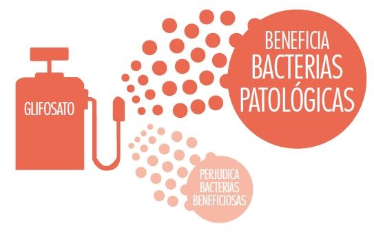 Cómo afecta el glisofato, el pesticida más usado - Veritas