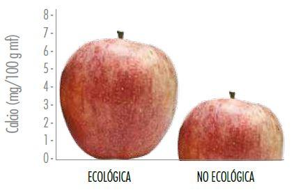 Calcio en la manzana ecológica - Estudios - Veritas